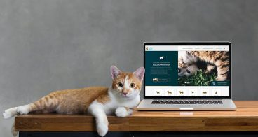 Webdesign | Veterinair Centrum Someren